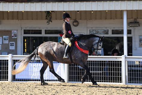 slievebloom equestrian hello show season 14 winners from the bspa winter
