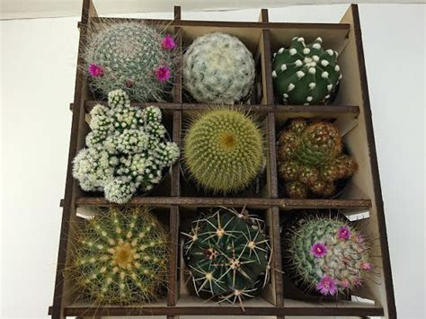 Shadow Box Planter by Cactus Plant Shadow Box Nine Cacti Planter Complete