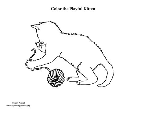kitten yarn coloring page kitten playing with yarn coloring page