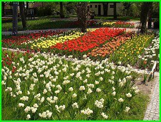 Britzer Garten Tulpenschau by Quot Tulipan Tulpenschau Quot
