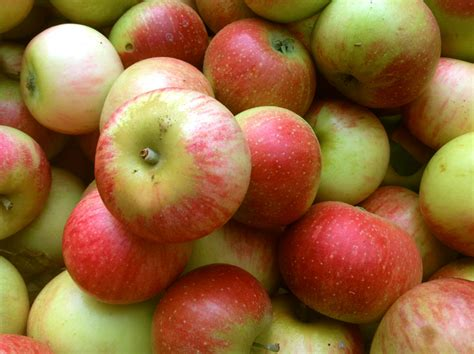 apple to apple apples nichols farm orchard