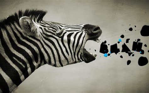 abstract zebra wallpaper zebra animals hd wallpapers