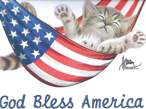 Flags Animals patriotic kitten in an american flag hammock he s the happiest cat in the whole world now