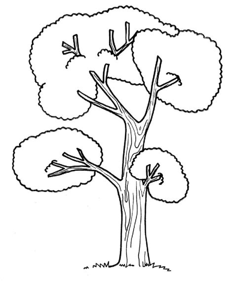 trees coloring pages images  pinterest kids