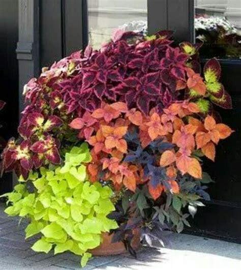 fioriere da davanzale oltre 25 fantastiche idee su fioriere per davanzale su