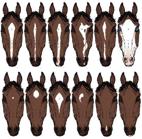 anatomie a fyziologie koně. barvy, znaky a výžehy.