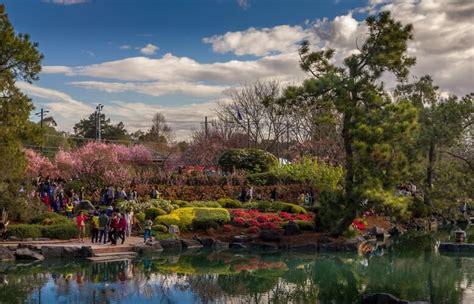 cherry blossom festival in auburn botanical gardens