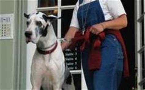feeding a great dane puppy 1000 ideas about puppy schedule on new puppy new puppy checklist and