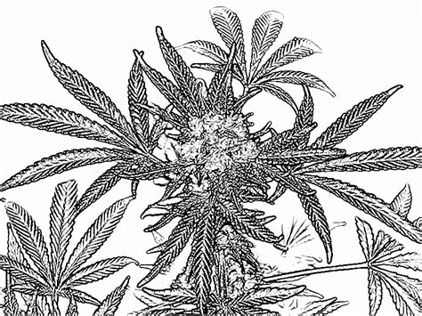 weed leaf coloring page pot leaf coloring page coloring home