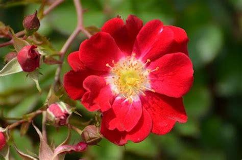 google images flower google flower pinterest