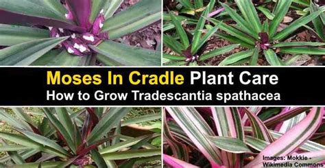 pin  kelly jones  indoor plants   plants
