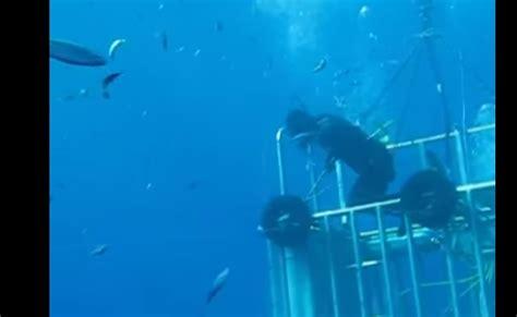 gabbia squali sub esce dalla gabbia di protezione e tocca