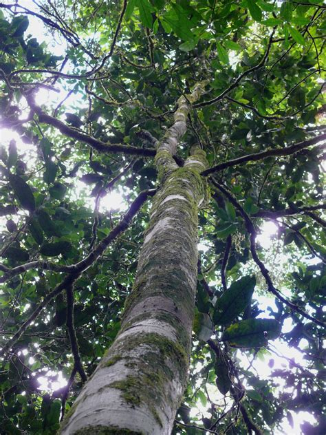tree species schoolkids name a new tree species from tanzania while