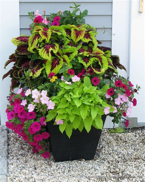 Flower Planters by A Crescent Garden Container Filled With Coleus Petunias