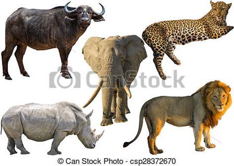 african big five animals, buffalo, elephant, leopard