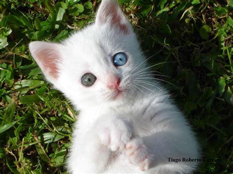 imagenes surrealistas de gatos fotos divertidas e videos engraados de gatos gatinhos e