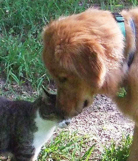 introducing a puppy to a cat introducing your new to your resident cat