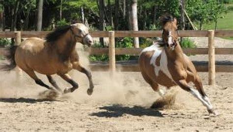 gratis paarden paarden op spelen 2 foto gratis download