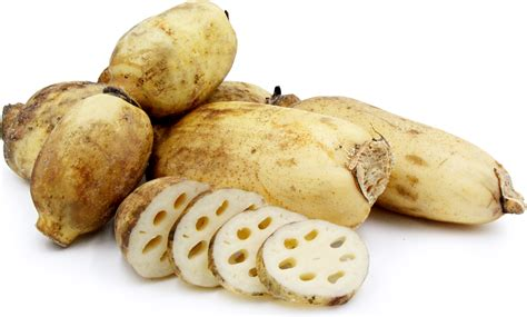 lotus root information recipes and facts