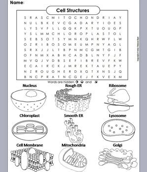 Cell Organelles Review Worksheet