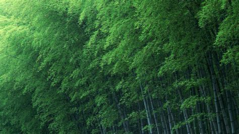 green japanese wallpaper green bamboo wallpapers wallpaper cave