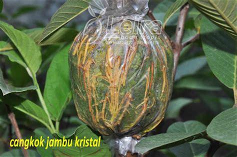 Plastik Pembungkus Okulasi tips mencangkok tanaman buah leira buah tropis