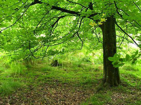 alberi alto fusto da giardino alberi alto fusto alberi alberi ornamentali