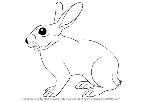 how to a rabbit learn how to draw a rabbit farm animals step by step drawing tutorials