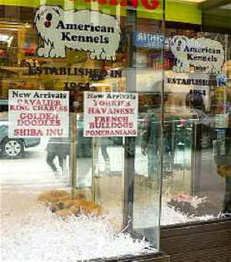 pet store that sells puppies best friends volunteers protest pet stores that buy puppies from puppy mills an all