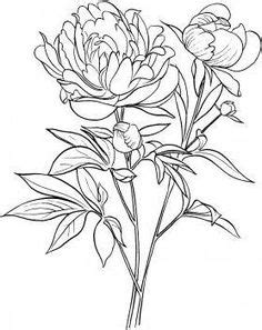 Paeonia Officinalis or European Common Peony | Downloads