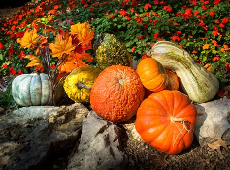 fall gardening 3 tips for fall gardening paradiso insurance