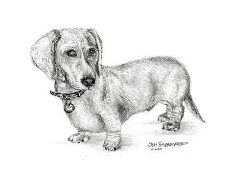 dachshund drawing by jim hubbard