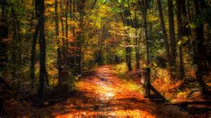 In Fall your guide to having the best fall ever
