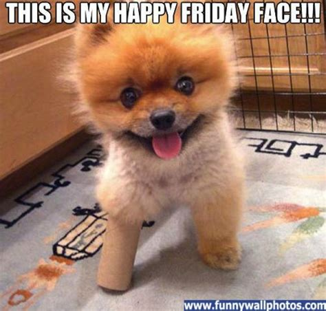 friday puppy the gallery for gt happy friday bulldog
