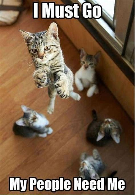Cat Alien Meme - cat meme cat memes pinterest aliens bye bye and heroes