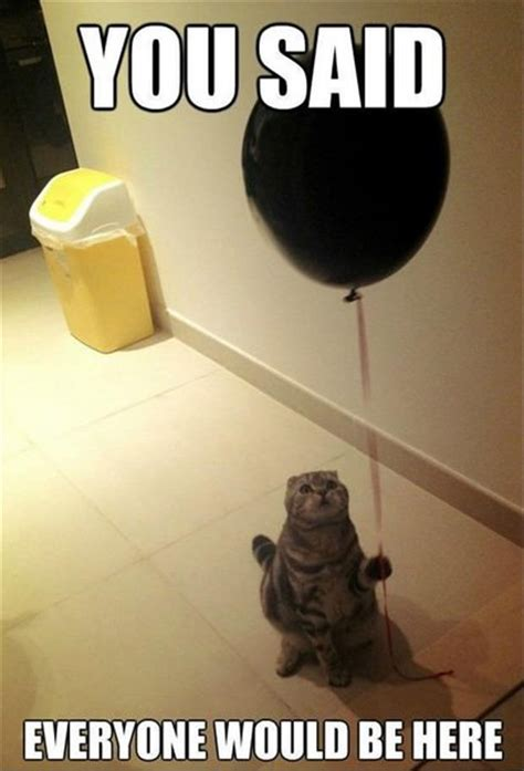 Funny Birthday Memes Tumblr - funny birthday party for cat dump a day
