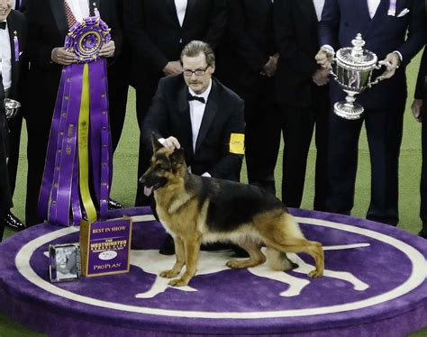 westminster kennel club show 2017 141st westminster kennel club show