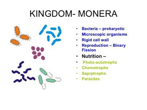 Monerans Examples