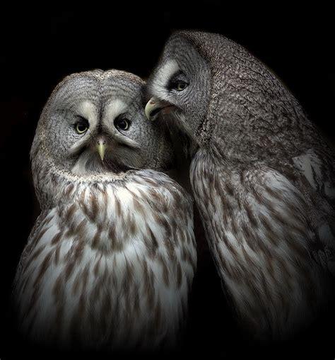 owls talk by lilia73 on deviantart