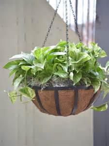 hanging plants best outdoor hanging plants for spring hgtv
