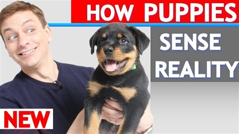 the puppy experience how does a puppy experience the world our for pets