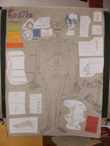anatomy and physiology coloring workbook answers page 122 počet nejlepš 237 ch obr 225 zků na t 233 ma člověk human na