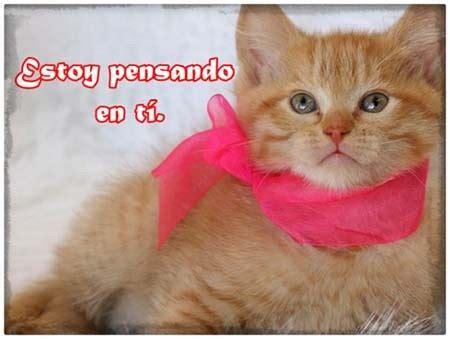 imagenes tiernas de gatitos con frases de amor im 225 genes tiernas de gatitos con frases de amor