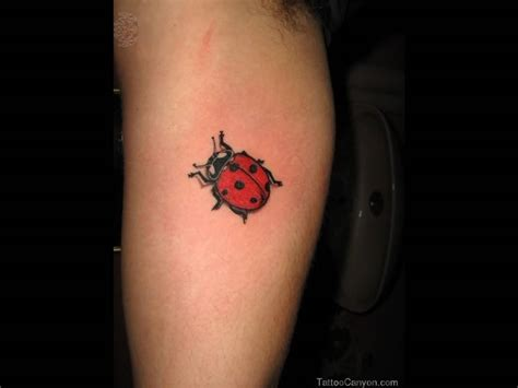 small sweet tattoos 41 beautiful ladybug tattoos ideas
