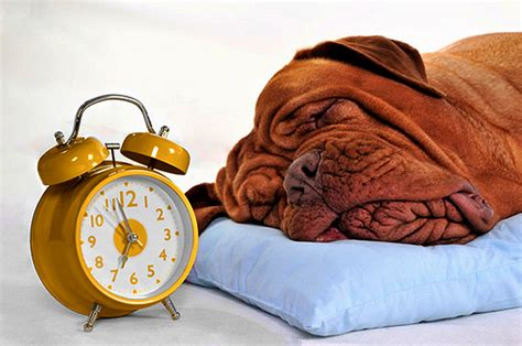 do dogs a concept of time daylight saving time how quot falling back quot can mess with your s