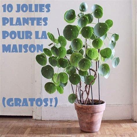Quand Planter Les Patates Douces by 17 Meilleures Id 233 Es 224 Propos De Plante De Patate Douce Sur