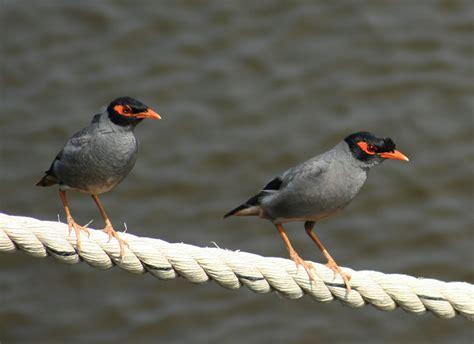 Birds Of Bangladesh Essay by Common Essay Mistakes Birds Of Bangladesh Multimediadissertation Web Fc2