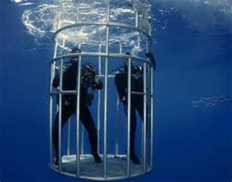 gabbia squali immergersi con gli squali lista di cose da fare muccapazza