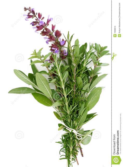 fresh herbs rosemary sage oregano stock images image
