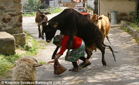 pictured: the moment a cow jumped over a woman (and the